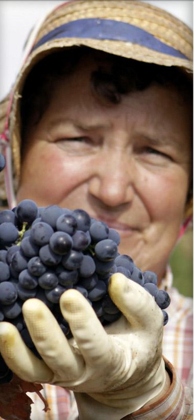 Carta de vinhos: 5 luxos que (só) o dinheiro não compra - Helena Bordon