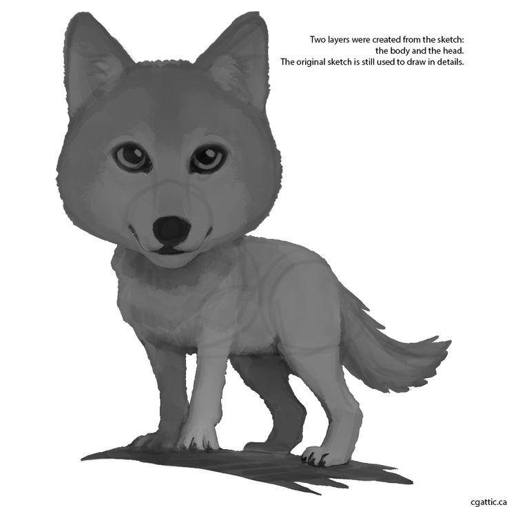 how to draw a cartoon wolf head