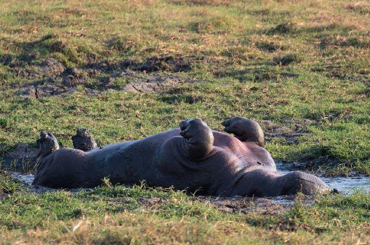 When wildlife activity is an oxymoron...