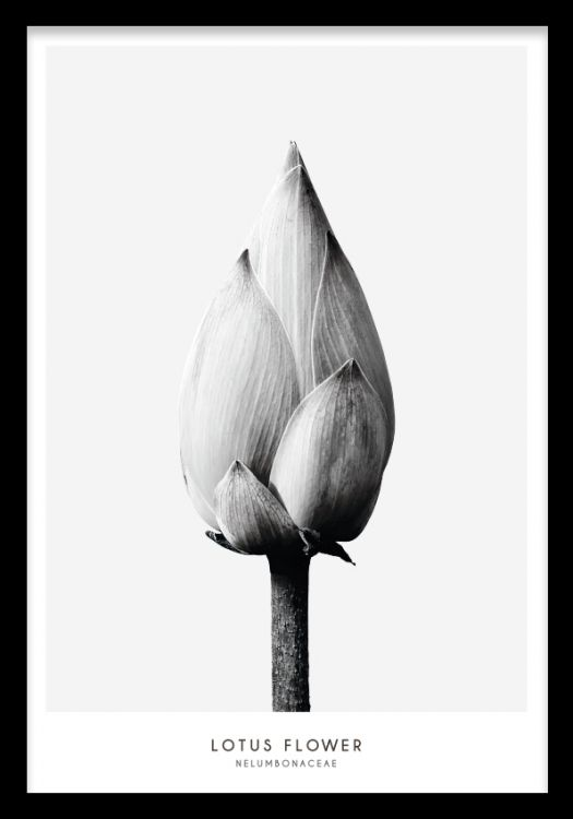 Botanisk affisch i minimalistisk inredning