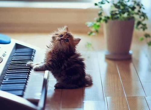 Awww kitty at the piano