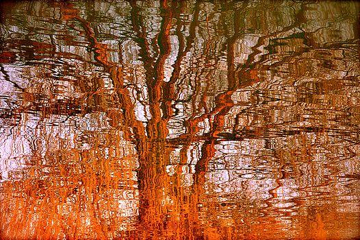 Luxartimage Barbara Iandolo - Albero in acqua