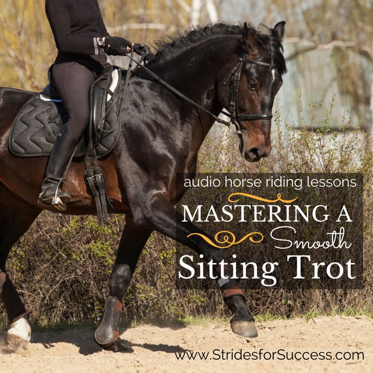 Do you find that when you have to ride sitting trot, whether or not there is any actual sitting going on is up for debate?! Sitting trot for many riders is a pain in the backside - literally!   It is supposed to be how you can 'stay with' your horse, and how you can influence him more with 'subtle movements', all which seem pretty impossible when there are 2 or 3 inches of daylight between your butt and the saddle with each stride!