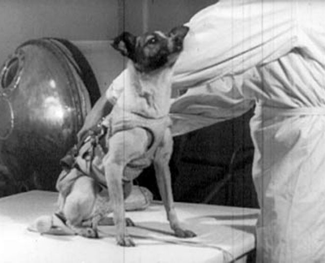 Read about the life (and death) of Laika, a stray who became the first dog to orbit the earth