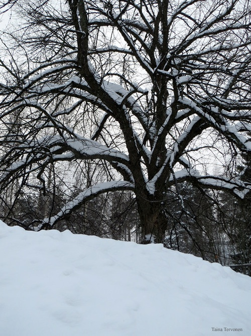 Snow, Lahti, photographer Taina Tervonen