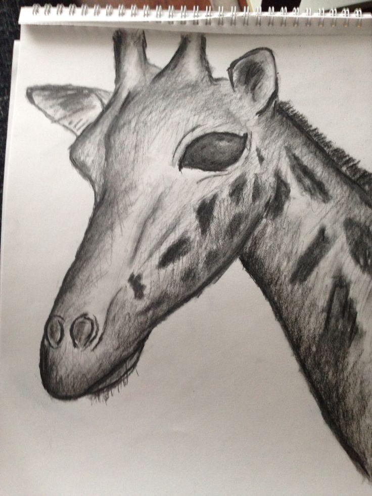 Giraffe, houtskool op papier