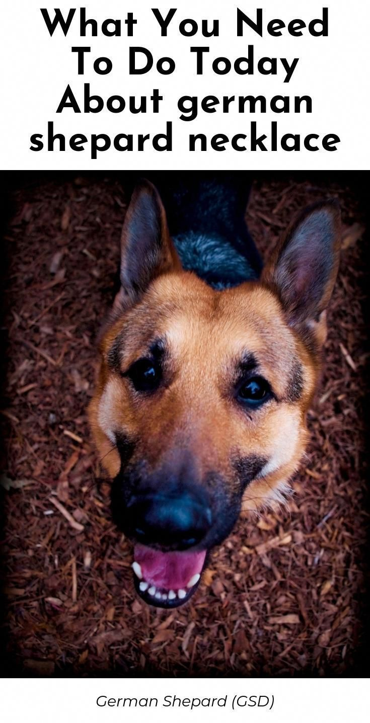 Searching For Purebred German Shepherd Puppies For Sale Near Me German Sheph German Shepherd Puppies German Shepherd Dogs Purebred German Shepherd Puppies