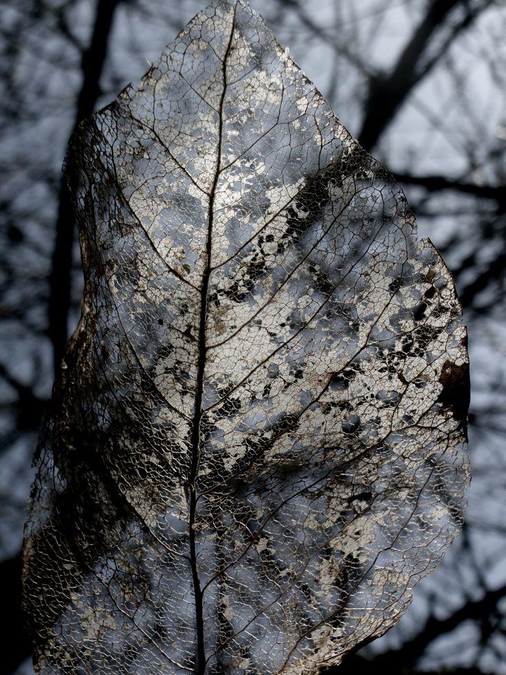 L'arbre Qui Cache La Foret : l'arbre, cache, foret, Jogo-z, L'arbre, Cache, Forêt, Arbre,, Foret,, Photos