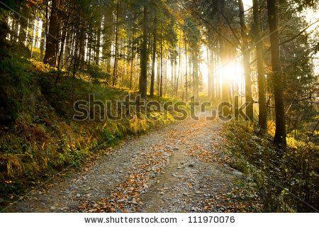 Beautiful autumn forest mountain path at sunset - stock photo