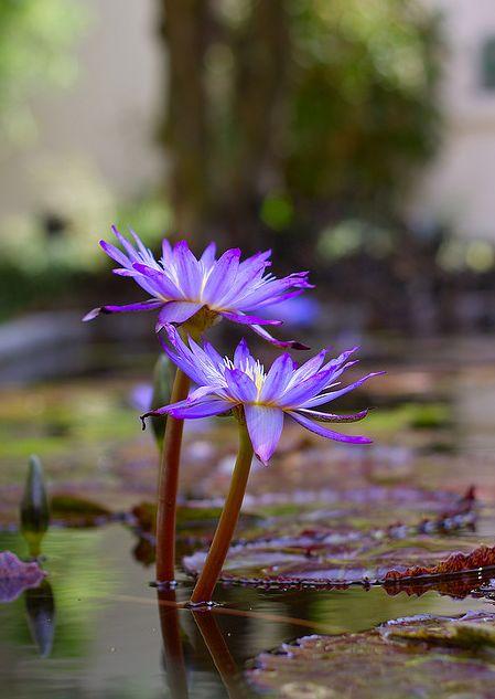VioletWind