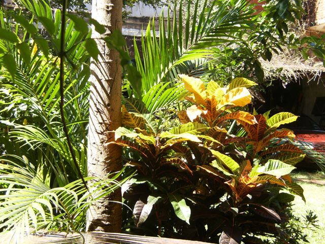 Mejores 45 im genes de arbustos con flores en pinterest for Plantas ornamentales croto