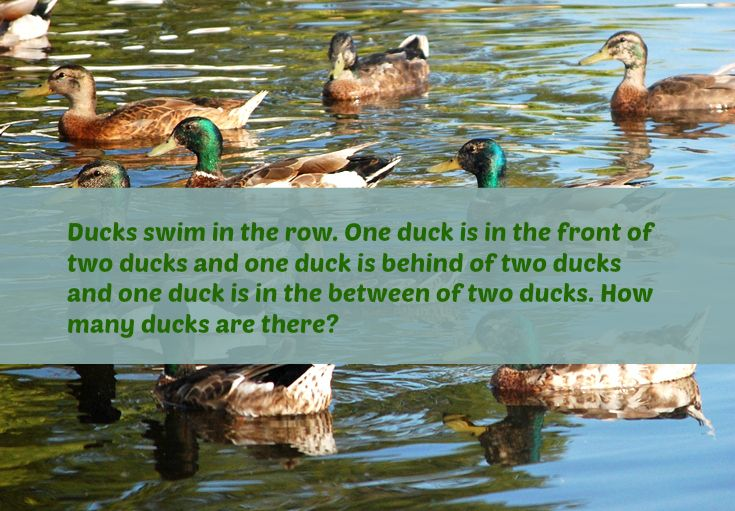 Ducks Swim In The Row One Duck Is In The Front Of Two Ducks And One Duck Is Behind Of Two Ducks And One Duck Is In The Between Of Tw