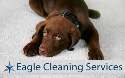 We are known for delivering quality and reliable #carpetcleaningservices to domestic as well as commercial clients throughout #Brisbane. http://eaglecleaningservices.com.au/carpet-cleaning-brisbane