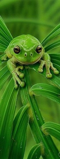 I love green! Enjoy all that green means to me, and maybe to YOU too!