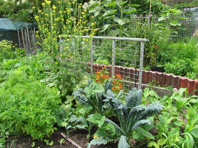 17 meilleures images propos de jardinage sur pinterest for Potager naturel sans entretien