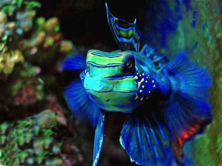 Fish salt water fish and exotic on pinterest for Exotic fish tanks