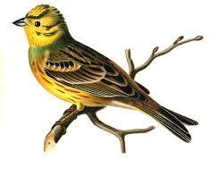 Bildresultat för fågel