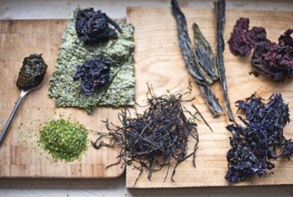 Super Powered Seaweed | Elissa Goodman