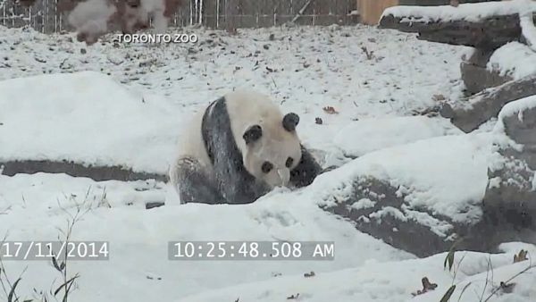 Da Mao Is Making the Most of Toronto's Wintry Weather