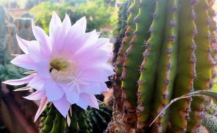 fiori e spine