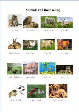 your mommy kills animals pdf