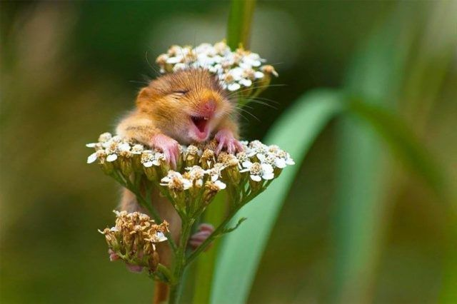 Funny animals photo with Comedy Wildlife Photography Awards 2017 – Funnyfoto | Funny Pictures - Videos - Gifs - Page 16