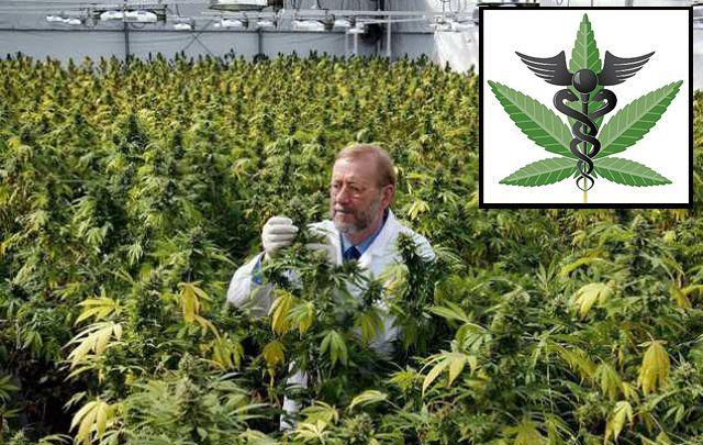 Schon seit über 12.000 Jahren wird Cannabis in sämtlichen Weltkulturen als Nutz- und Heilpflanze verwendet, Experten bestätigen die positiven Effekte vielfach. In der Öffentlichkeit gilt die Pflanz…