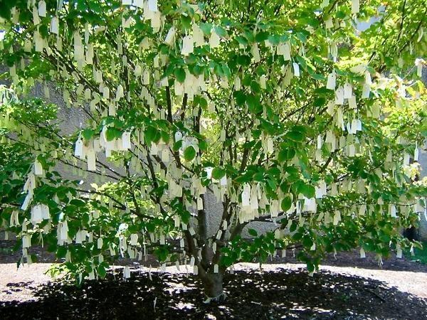 Les 25 meilleures id es concernant arbre des souhaits mariages sur pinterest arbres de souhait - L arbre a souhait ...
