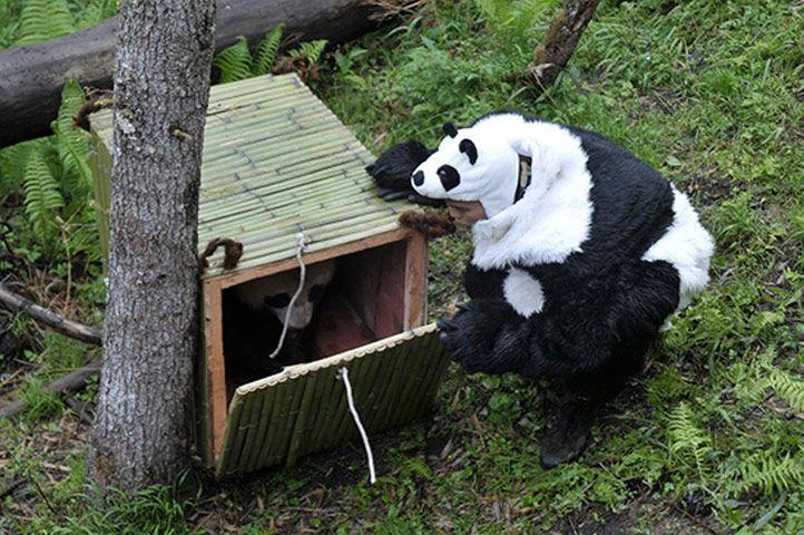 Pandayı ürkütmemek için...