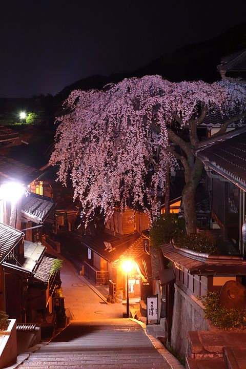 Cherry Blossom, Kyoto, Japan 『京都新聞写真コンテスト LEDで照らすゴージャス枝垂れ』  #桜 #CherryBlossom