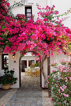 Blooming hot pink bougainvillea decorating a white entrance or archway to a stone patio.