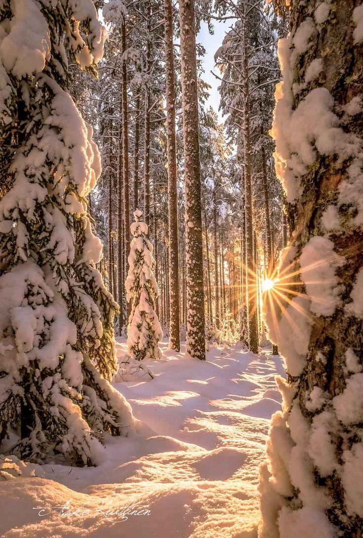 ***Valoa metsässä // Light in the forest (Finland) by Asko Kuittinen❄️nw.