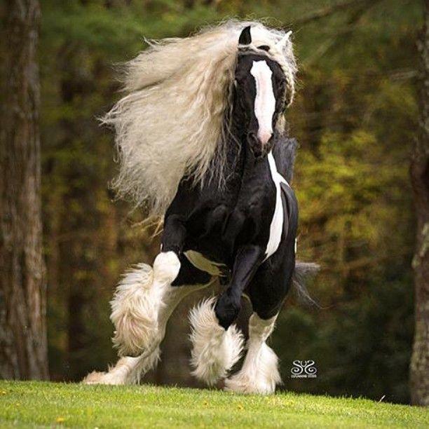 Favorito Oltre 25 fantastiche idee su Cavalli da tiro su Pinterest  IZ35