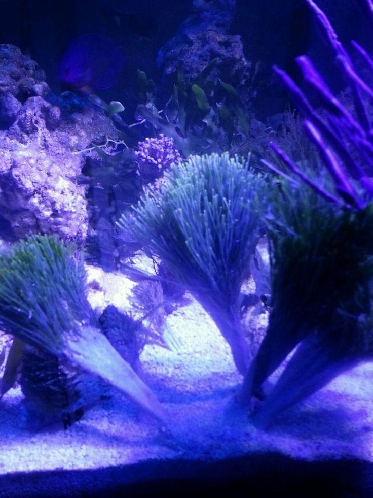 1000 images about saltwater aquarium on pinterest rocks for Live saltwater fish