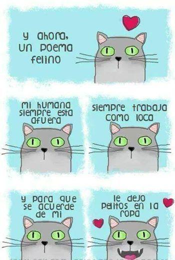 Poema Gatuno