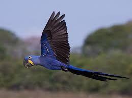 Afbeeldingsresultaat voor vliegende tropische vogels