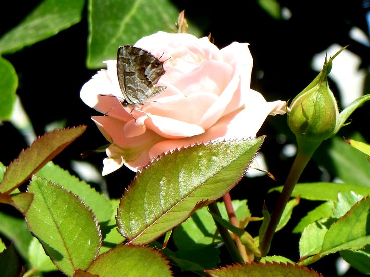 la mariposa le hace compañia.