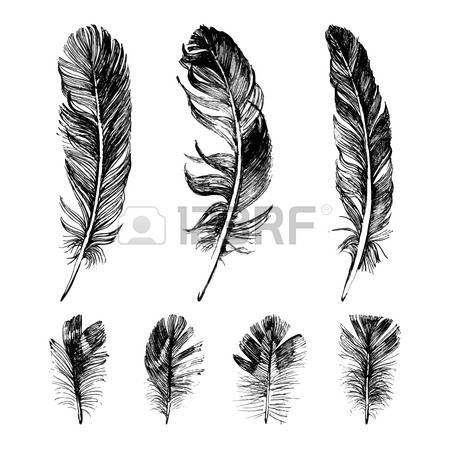 feather: Hand drawn feathers set on white background