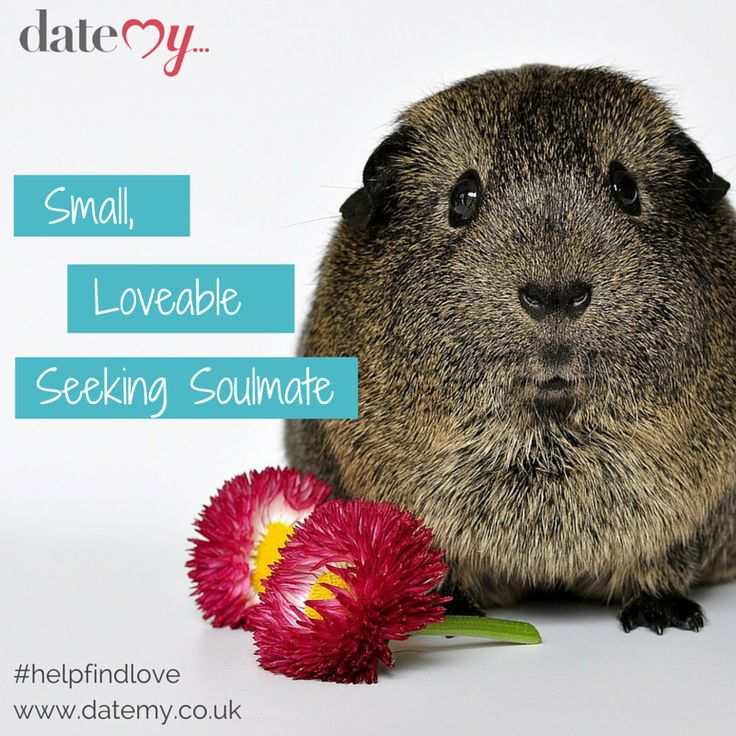 TVNZ has a reality show about guinea pigs dating and it rocks