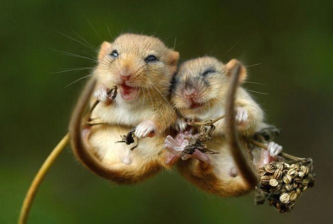 1. Un câlin entre 2 petites souris et un couple de cochons qui dorment ensemble