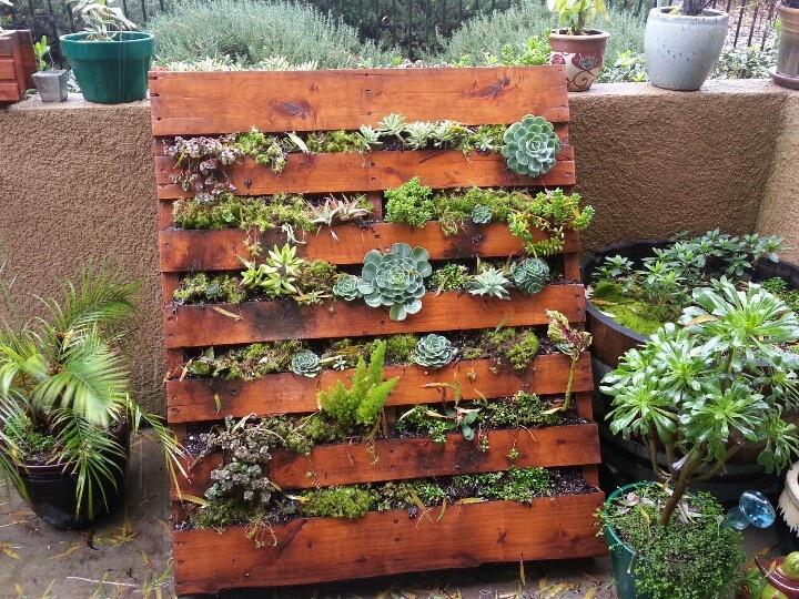Our succulent pallet garden.