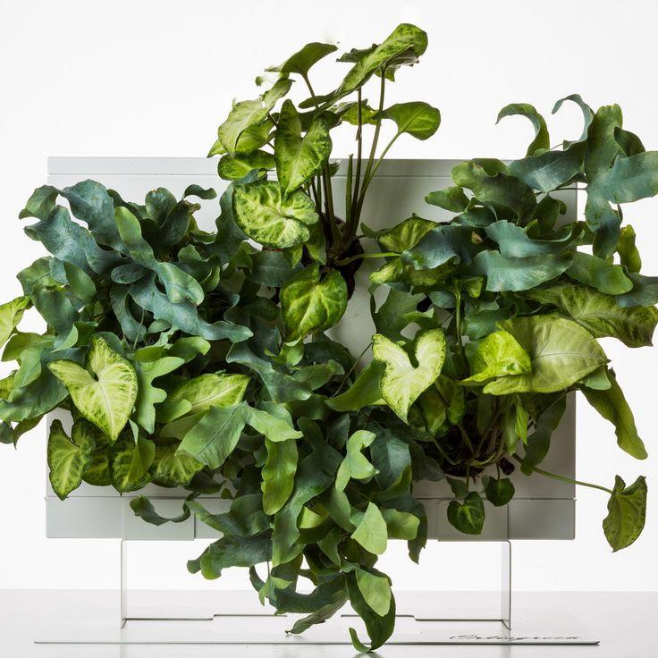 Stojan na květináče HOH!, 39x25 cm | Bonami