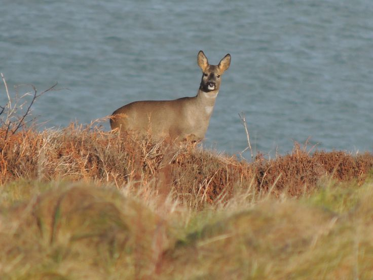 Our reserve is alive with wildlife at the Mull of Galloway