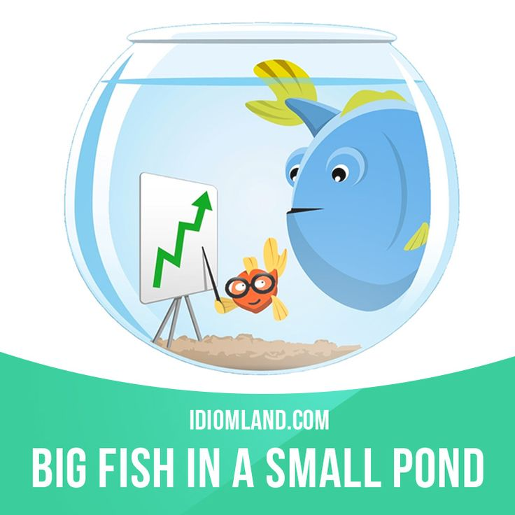 Big fish in a small pond is an important person in a for Big fish in a small pond