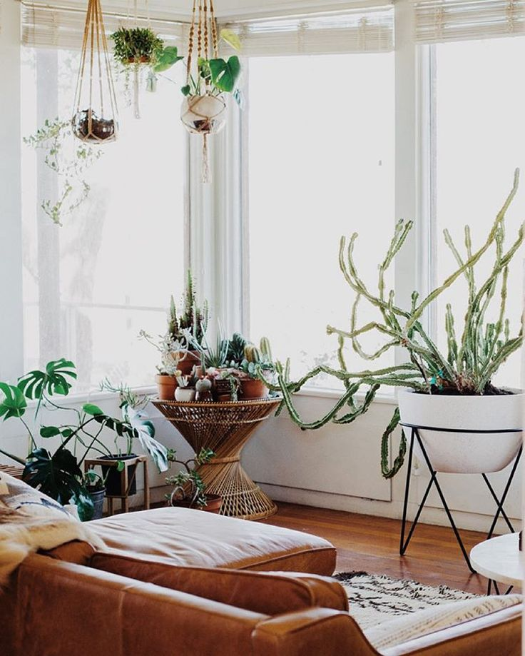 Small Houseplants For Warm Rooms