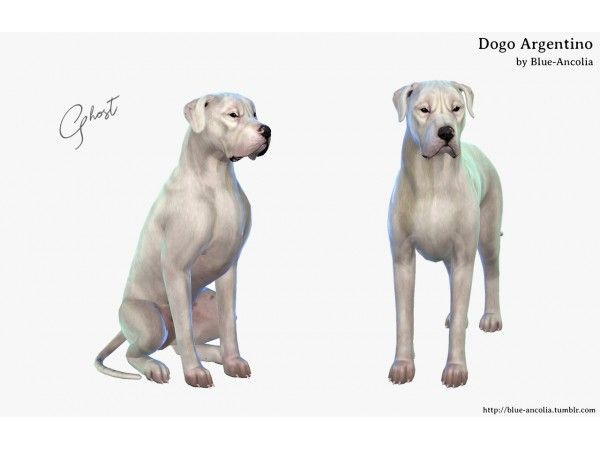 Dogo Argentino By Blue Ancolia Sims Pets Sims 4 Pets Sims 4