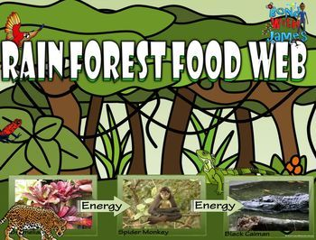$ Rainforest Food Chain & Food Web Card Sort