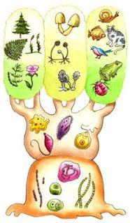 Conociendo la Historia de la  Clasificación de los seres vivos: http://cienciasnaturales.carpetapedagogica.com/2013/02/conociendo-la-historia-de-la-clasificacion-de-los-seres-vivos.html