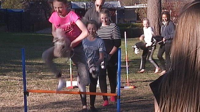 Hoppning, dressyr och turridning i skogen – fast på en käpphäst. En ny sport från Finland har fått fäste i Sverige och Västerbotten. Nu har käpphästridning runt 10.000 utövare.  – Det är en riktig sport, säger Tilde Öhgren.