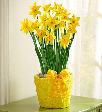 26 best 1800flowers coupon images on pinterest floral arrangements 1800flowershopping coupon code daffodil fandeluxe Choice Image
